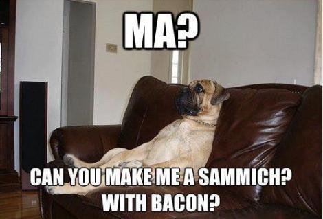 a.baa-One-very-lazy-dog