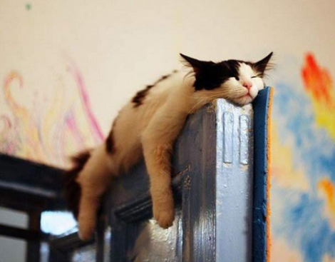 Funny-And-Strange-Sleeping-Positions40